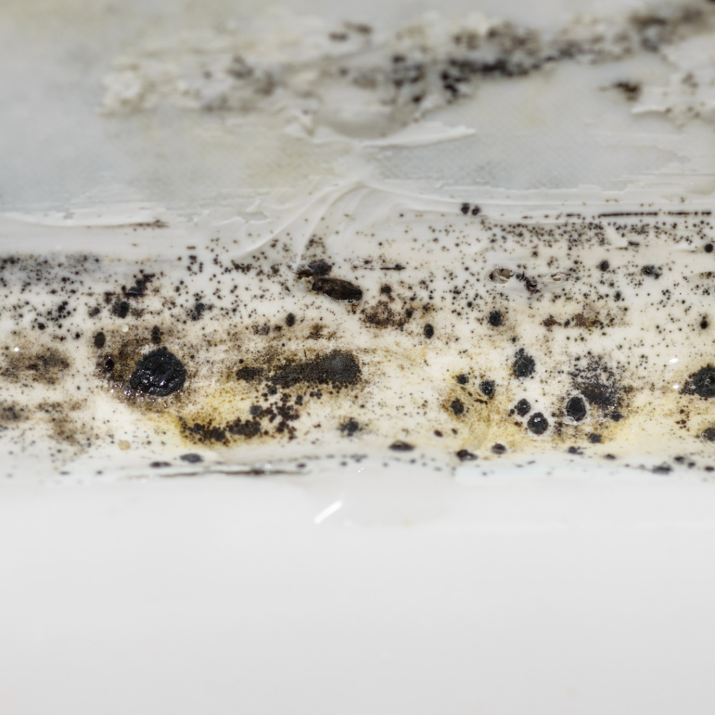 The Dangers Of Mold In Your Home 1